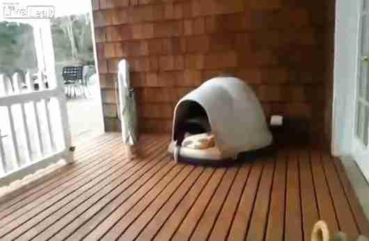 dinfo.gr - Πόσοι σκύλοι χωρούν σε ένα μικρό σκυλόσπιτο;