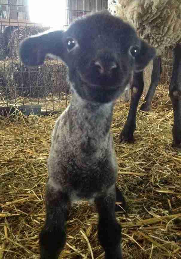 dinfo.gr - Τα 35 πιο χαρούμενα ζώα που έχετε δει!