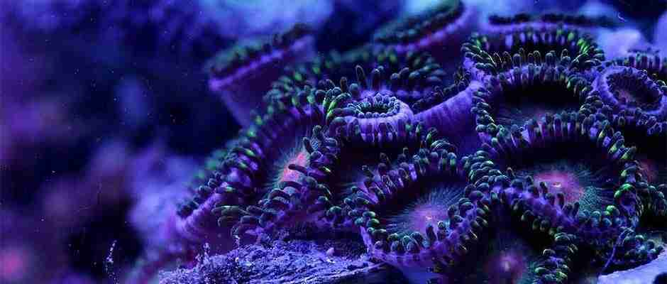 dinfo.gr - Η ζωή των κοραλλιών σε ένα εκπληκτικό Macro Timelapse βίντεο που υπνωτίζει!