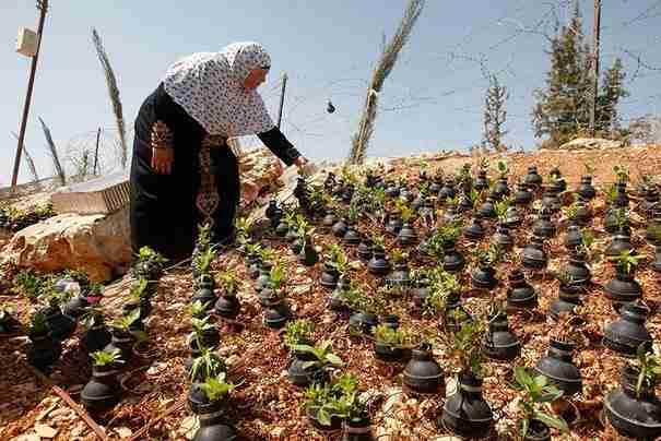 dinfo.gr - Μια ηλικιωμένη από την Παλαιστίνη μαζεύει τις Ισραηλινές χειροβομβίδες και φυτεύει μέσα τους λουλούδια!