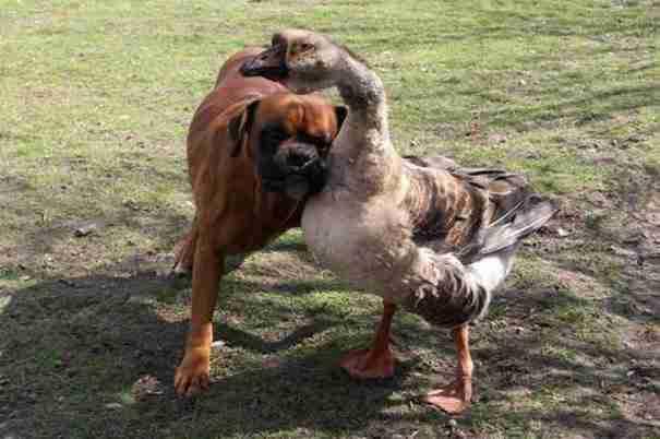 dinfo.gr - 25 αστεία γεγονότα για τα σκυλιά που θα σας εντυπωσιάσουν