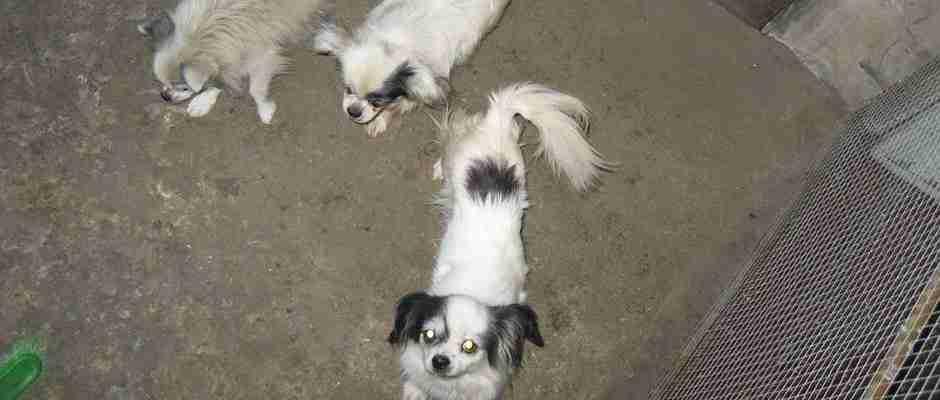 dinfo.gr - Αυτός ο σκύλος ήταν αθώος μέχρι αποδείξεως του εναντίου μέχρι που.. τον πρόδωσαν οι φίλοι του