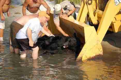 dinfo.gr - Ένας ήρωας έκανε το αδιανόητο για να σώσει ένα από τα πιο επικίνδυνα ζώα του πλανήτη