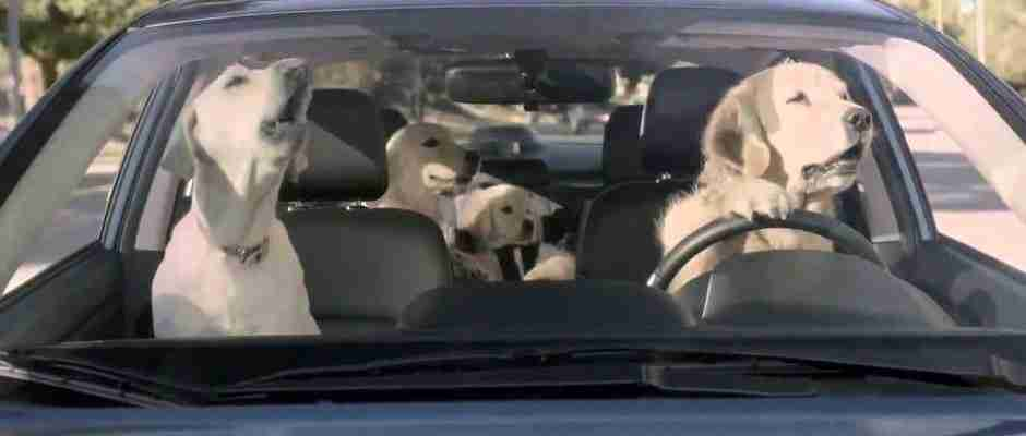 Απίθανο βίντεο παρουσιάζει με ξεκαρδιστικό τρόπο τι θα συνέβαινε αν οι σκύλοι μπορούσαν να οδηγούν! - dinfo.gr