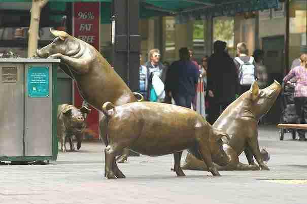 «Γουρούνια», Αδελαΐδα, Αυστραλία