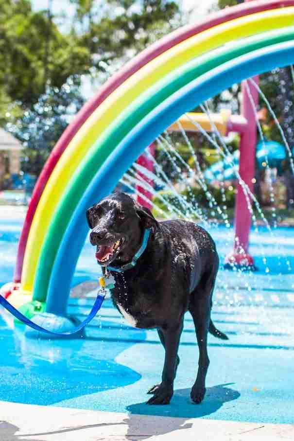 dinfo.gr - Η τελευταία μέρα της ζωής ενός σκύλου ήταν πολύ όμορφη αλλά και εντελώς σπαρακτική!