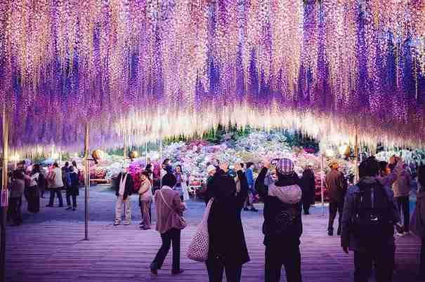 Δέντρο γλυσίνα 144 ετών στην Ιαπωνία θυμίζει υπέροχο ροζ ουρανό!