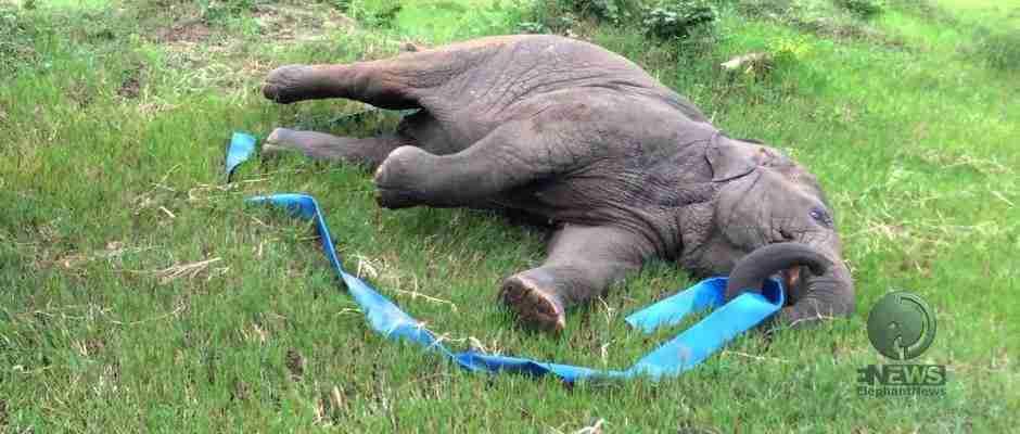 Αυτό που έκανε το μικρό ελεφαντάκι μόλις το έσωσαν, είναι ότι ωραιότερο είδατε σήμερα