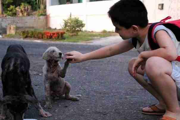 Το 9χρονο αγόρι που έφτιαξε καταφύγιο ζώων στο γκαράζ του σπιτιού του!