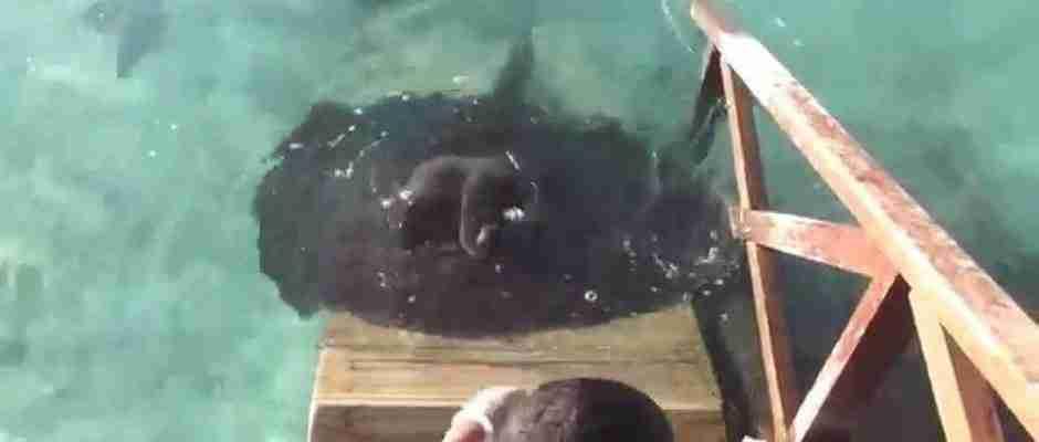 Ένας άντρας κάθονταν και τάιζε τα ψάρια όταν εμφανίστηκε μπροστά του ο πιο παράξενος επισκέπτης
