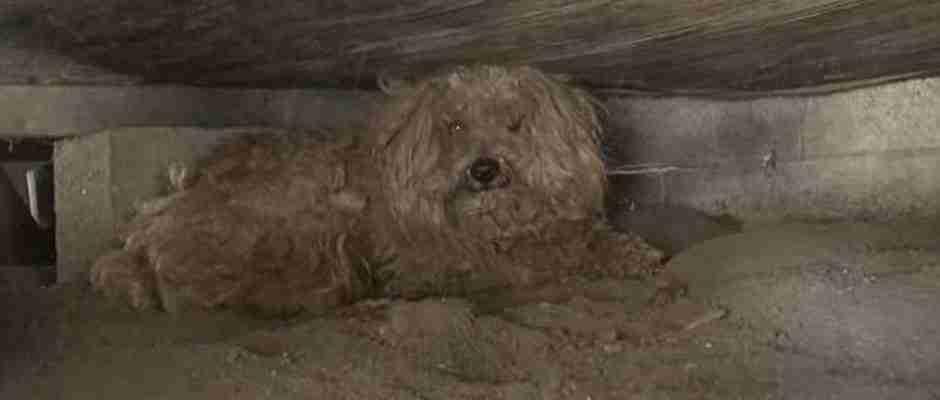 Όταν πέθανε ο ιδιοκτήτης του, αυτός ο σκύλος έμεινε για ένα χρόνο στο σπίτι περιμένοντας τον