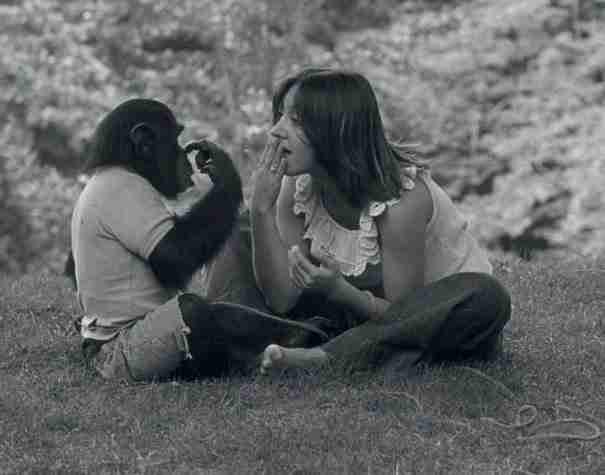 Όταν η γυναίκα που φρόντιζε αυτόν τον χιμπαντζή του είπε ότι έχασε το μωρό της, δεν περίμενε ποτέ ότι θα αντιδρούσε έτσι.