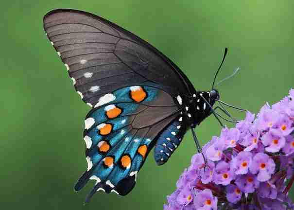 19 εκπληκτικές φωτογραφίες με κάμπιες που μεταμορφώνονται σε όμορφες πεταλούδες!