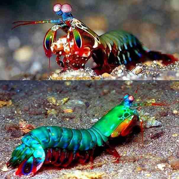 30 έντομα και ζώα με απροσδόκητα χρώματα!