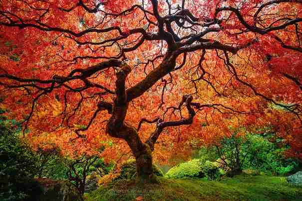 """24 υπέροχες φωτογραφίες """"πριν και μετά"""" την έλευση του Φθινοπώρου"""