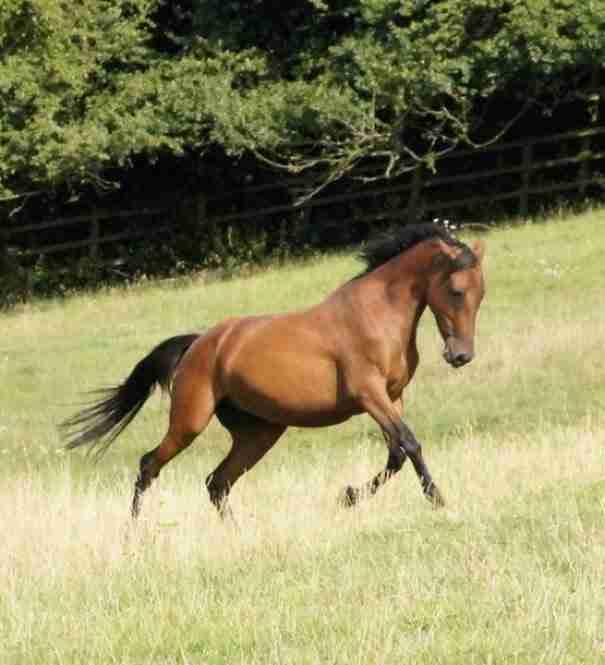 Όταν βρήκαν αυτό το άλογο ήταν σε τραγική κατάσταση έτοιμο να πεθάνει. Διαβάστε την απίστευτη ιστορία της