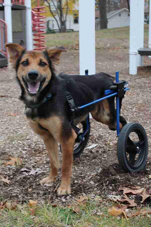 Όλοι προσπερνούσαν αυτό το παραπληγικό σκυλί. Ώσπου μια γυναίκα αποφάσισε να του δώσει μια ευκαιρία