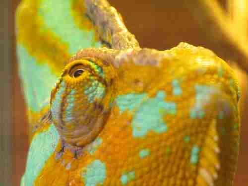 Τα 10 πιο εντυπωσιακά μάτια του ζωικού Βασιλείου!