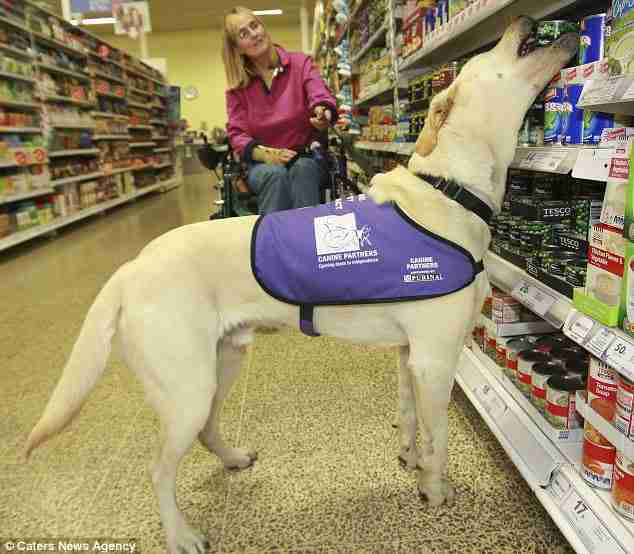 Πως ένα ταλαντούχο σκυλί άλλαξε τη ζωή μιας γυναίκας με ειδικές ανάγκες