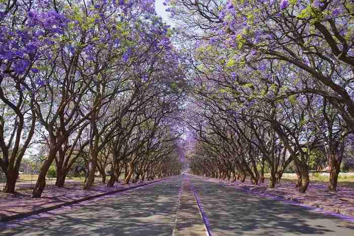 Κάλιναν, Νότια Αφρική