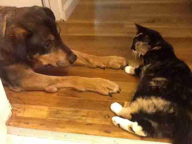 Από τότε που πέθανε ο σκύλος, αυτή η γάτα κάνει κάτι το αξιολάτρευτο!