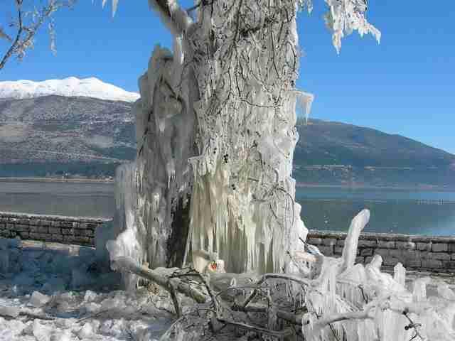 Δέντρο στη λίμνη των Ιωαννίνων