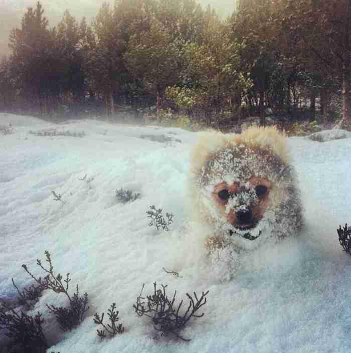 # 11 Αυτό το κουτάβι παίζει στο χιόνι για πρώτη φορά