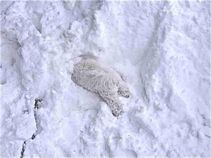 # 12 Η Flossie παίζει στο χιόνι για πρώτη φορά