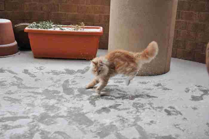 # 4 Η Τζόνσι βλέπει χιόνι