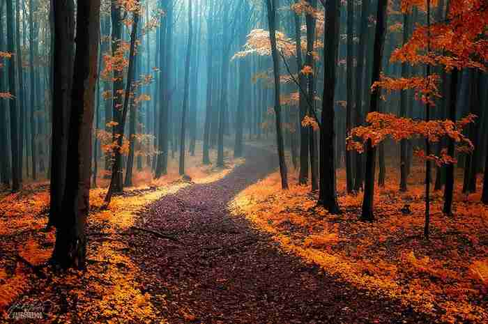 20 από τα ωραιότερα και πιο μυστηριώδη δάση στον κόσμο!