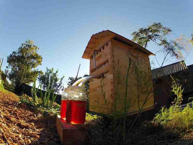Εντυπωσιακή εφεύρεση: Οι κυψέλες που επιτρέπουν να συλλεχθεί το μέλι αυτόματα χωρίς να ενοχλούνται οι μέλισσες