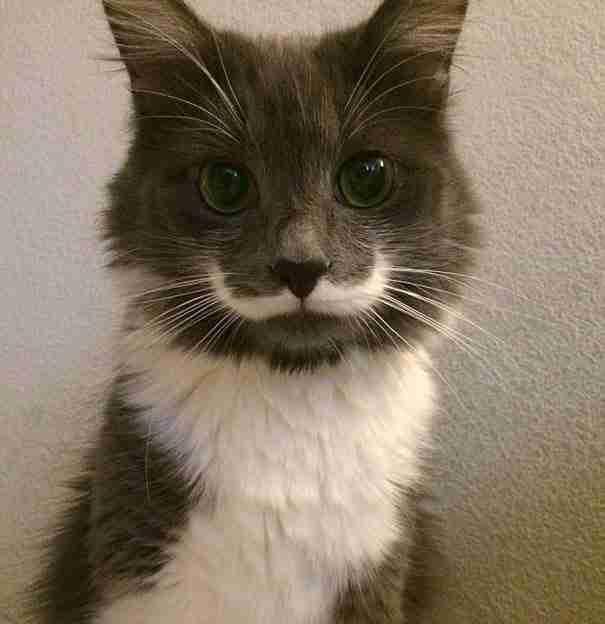 Μερικές φορές τα ζώα μοιάζουν εκπληκτικά μοναδικά!