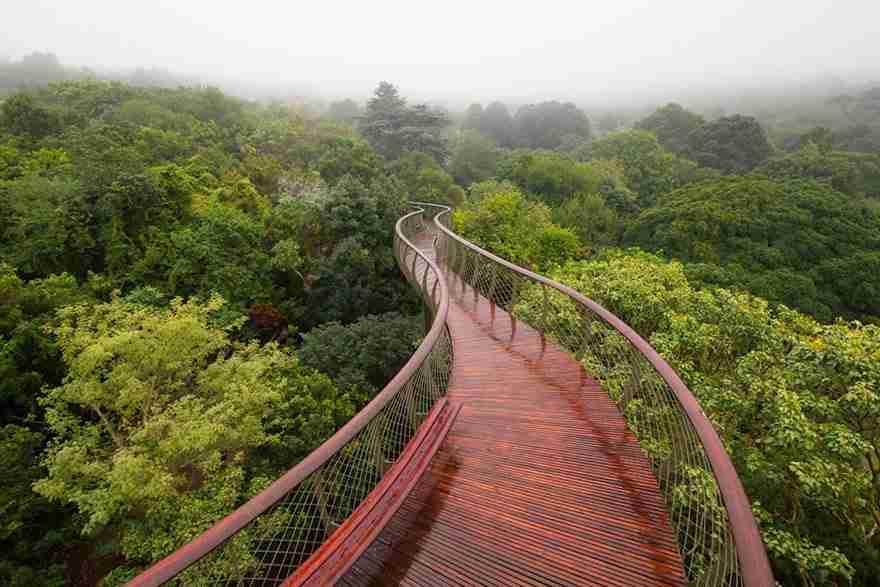 Αυτός ο δρόμος πάνω από τα δέντρα είναι ένα πραγματικό όνειρο!