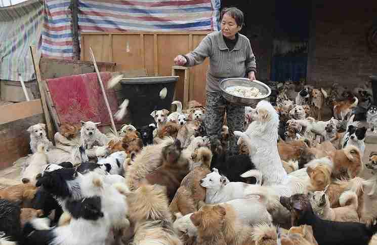 Κάθε μέρα 5 ηλικιωμένες ξυπνούν στις 4 το πρωί για να ταΐσουν 1.300 αδέσποτα σκυλιά