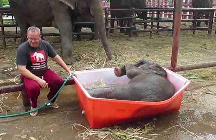 Ένα ελεφαντάκι προκαλεί τον πανικό όταν έρχεται η ώρα για μπάνιο