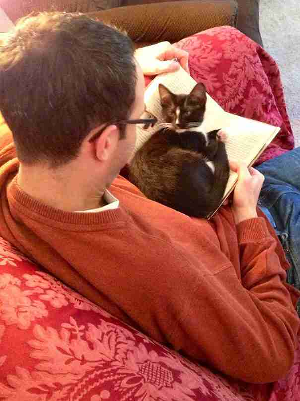 20 γάτες που χρειάζονται την προσοχή σας ακριβώς τη στιγμή που αρχίζετε να διαβάζετε