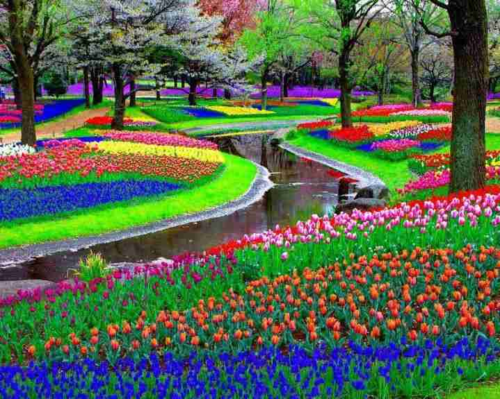 Πάρκο Keukenhof, Λίσσε, Ολλανδία
