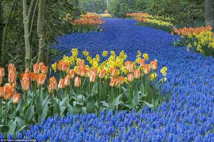 Λίσσε, Ολλανδία