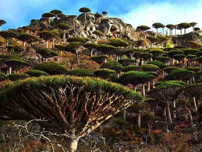 Αρχιπέλαγος Σοκότρα, Υεμένη