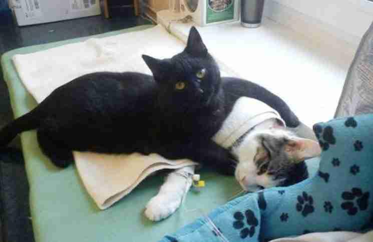 Ο Radamenes, ο οποίος επέζησε από μια λοίμωξη του αναπνευστικού, βοηθά σήμερα τα άλλα ζώα στο πολωνικό καταφύγιο να αισθανθούν καλύτερα