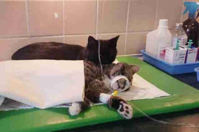 Λίγο πριν το κάνουν όμως, ένας κτηνίατρος τον άκουσε ξαφνικά να γουργουρίζει!