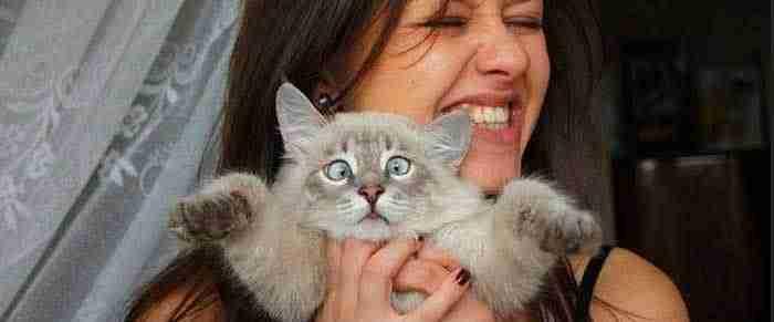 Το ΗΜΕΡΟΛΟΓΙΟ της γάτας: