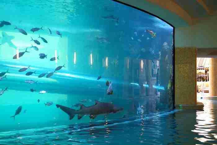 Πισίνα Golden Nugget στο Λας Βέγκας, Νεβάδα