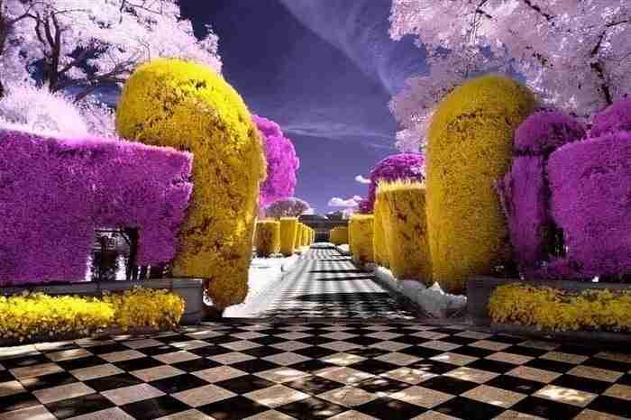 Υπέρυθρη φωτογραφία ενός κήπου. Κάπως έτσι αντιλαμβάνονται οι μέλισσες τα λουλούδια.