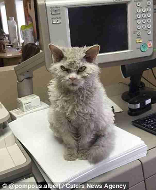 Μάλλον αυτή είναι η πιο νευριασμένη γάτα στον κόσμο. Δείτε τις φωτογραφίες που το επιβεβαιώνουν