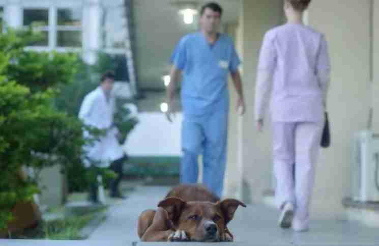 Σπαρακτικό βίντεο δείχνει ότι η αφοσίωση ενός σκυλιού δεν τελειώνει ποτέ..
