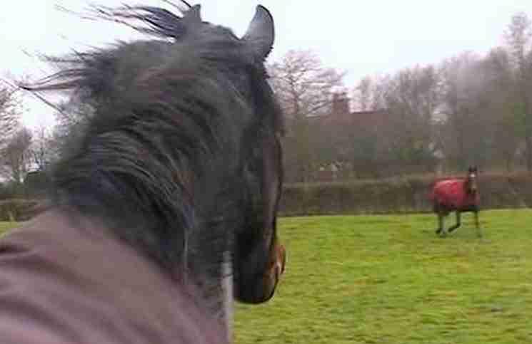 Έχουν τα άλογα μνήμη και συναισθήματα; Αυτό το βίντεο θα πείσει και τον πιο δύσπιστο