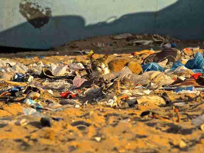 Μια γάτα απολαμβάνει τον ήλιο σε σημείο που τοποθετούνται οι κάδοι απορριμμάτων. Wetsahara, Μαρόκο