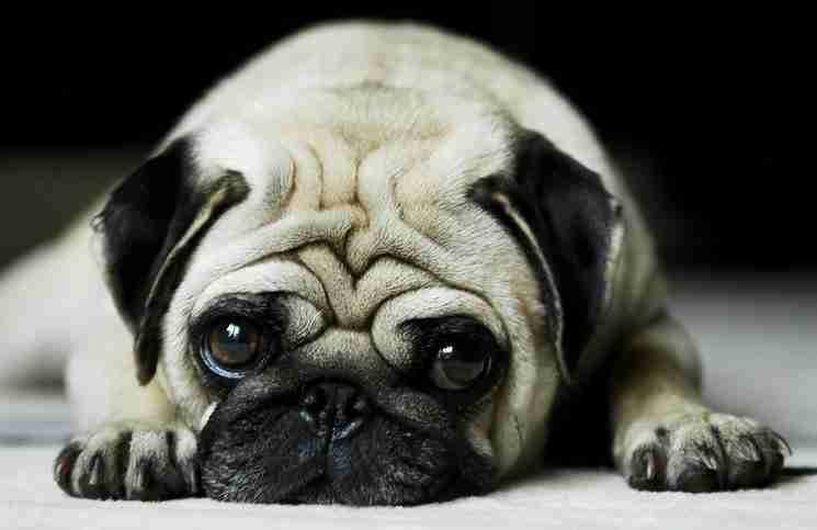 Το υπέροχο βίντεο που θα αλλάξει τον τρόπο που βλέπετε ένα σκύλο!