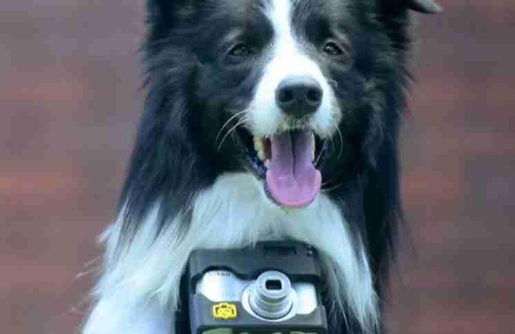 Τοποθέτησαν σε αυτό το σκυλί μια κάμερα που τραβάει φωτογραφίες όποτε είναι ενθουσιασμένο!
